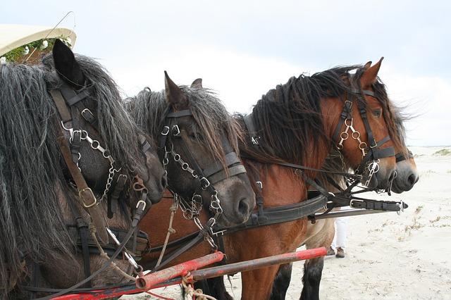 Paardrijden op het strand op Schiermonnikoog