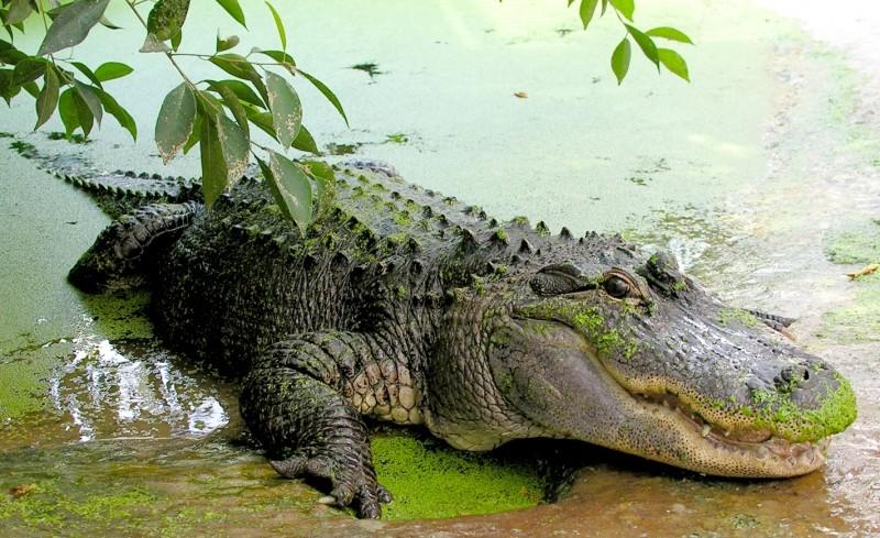 Activiteiten Zeeland: Reptielenzoo Iguana