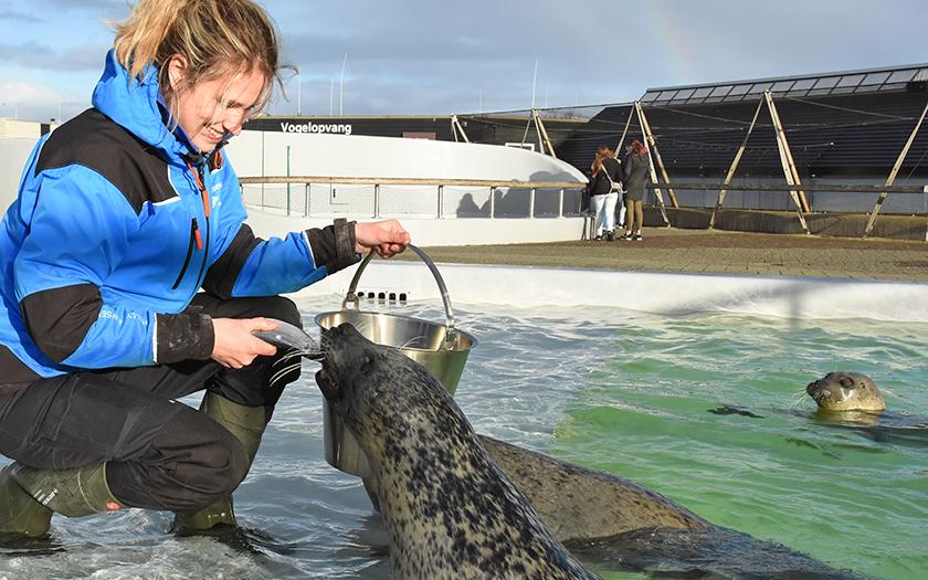 Activiteiten Waddeneilanden: Ecomare Texel Zeehondenopvang